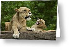 Momma Lion Over Cubs Attitude Greeting Card