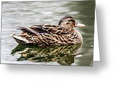 Female Mallard Duck Greeting Card