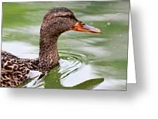 Female Mallard Headshot And Reflection Greeting Card