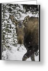 Female Moose In A Winter Wonderland Greeting Card