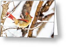 Female Northern Cardinal In The Snow Greeting Card