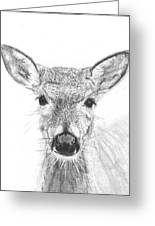 Female White-tailed Deer Greeting Card