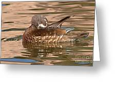 Female Wood Duck Preening On The Water Greeting Card