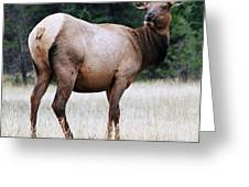 Feme Elk Greeting Card