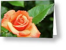 Feminine Rose Greeting Card