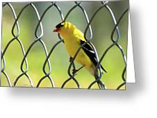 Fence And Feathers Greeting Card