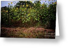 Fence Line Sunflowers Greeting Card