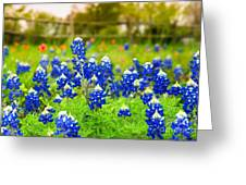 Fence Me In With Flowers Greeting Card