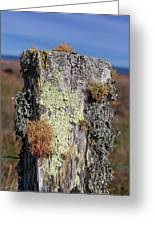 Fence Post Encrusted With Lichen  Greeting Card
