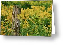 Fence Post7139 Greeting Card