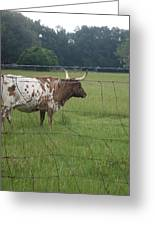 Fence Protection Vrs Fl Longhorn Greeting Card