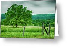 Fence Row And Tree Greeting Card