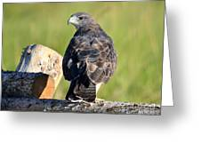 Fence Sitter Greeting Card