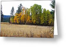 Fenced Grove Greeting Card