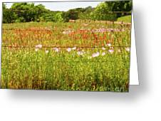 Fenced In Wildflowers Greeting Card
