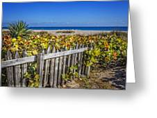 Fences On The Dunes Greeting Card