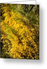 Fens In Fall Color Greeting Card