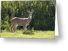 Feral Axis Deer Greeting Card