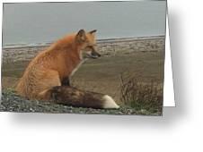 Ferdinand Fox  Greeting Card
