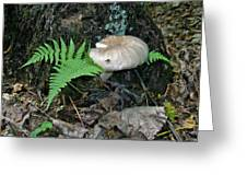 Fern And Mushroom Greeting Card