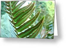Fern Art Print Green Forest Ferns Baslee Troutman Greeting Card