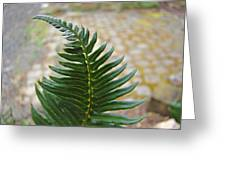 Fern Art Prints Green Garden Fern Branch Botanical Baslee Troutman Greeting Card