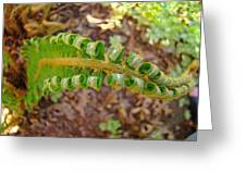 Fern Branch Leaves Art Prints Forest Ferns Natures Baslee Troutman Greeting Card