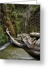 Fern Canyon Creek Greeting Card