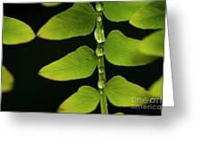 Fern Close-up Nature Patterns Greeting Card
