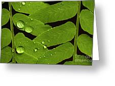 Fern Close-up With Water Droplets  Greeting Card