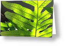 Fern Delight Greeting Card