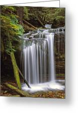 Fern Falls Greeting Card