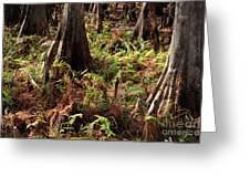 Fern Forest Floor Greeting Card
