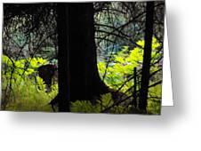 Fern Forest Greeting Card