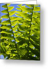 Fern Fronds Against Blue Sky Greeting Card