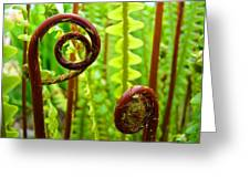 Fern Fronds Fine Art Photography Forest Ferns Green Baslee Troutman Greeting Card
