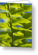 Fern Fronds Greeting Card