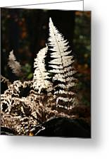 Fern Glow 2 Greeting Card