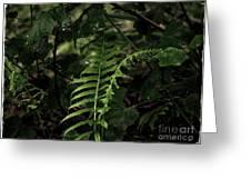 Fern Green Greeting Card