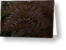 Fern Kaleidescope Greeting Card
