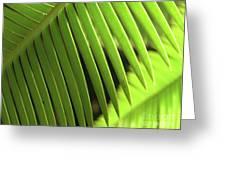 Fern Leaf Greeting Card