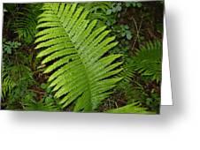 Fern Leaf In June Greeting Card