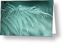 Fern Leaves Abstract 1. Nature In Alien Skin Greeting Card