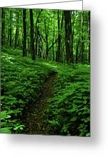 Fern Lined At In Ma Greeting Card