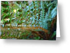 Fern Macro Forest Ferns Art Sunlit Giclee Prints Baslee Troutman  Greeting Card