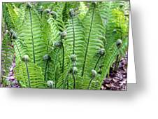 Fern Meet And Greet Greeting Card