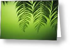 Fern On Green Greeting Card