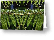 Fern Panorama Greeting Card