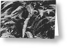 Fern Paradise  Greeting Card