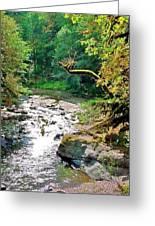 Fern River Oregon Greeting Card